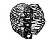 ANU-The Permanent Atom